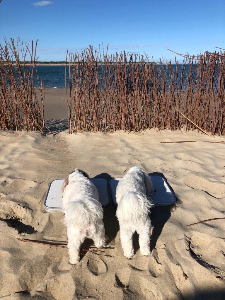 Hundemenü am Strand